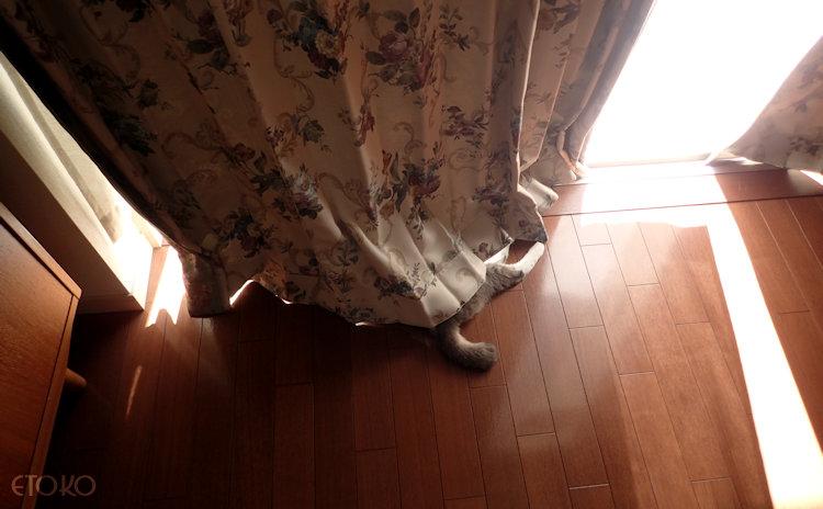 カーテンの裾から猫のしっぽが飛び出している