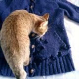 猫が布を食べるウールサッキング(ウールチューイング)の原因と実践した対策