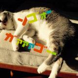 猫のいたずら防止に、クリスマスツリーの代わりにモビールを飾ろう【FLENSTED MOBILES】Angels of Love