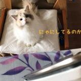なんにでも猫の手を貸したがる猫【動画あり】