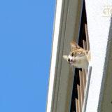 猫の目線のその先に