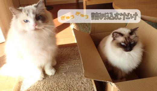箱に入った手作り猫の爪とぎとダンボール箱に入ったラグドール