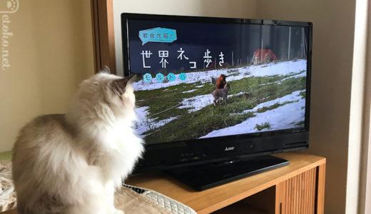 猫も楽しくみてる?『岩合光昭の世界猫歩き』と映画『ねことじいちゃん』