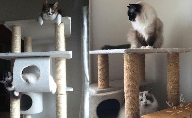 キャットタワーの上に猫たちが乗っている