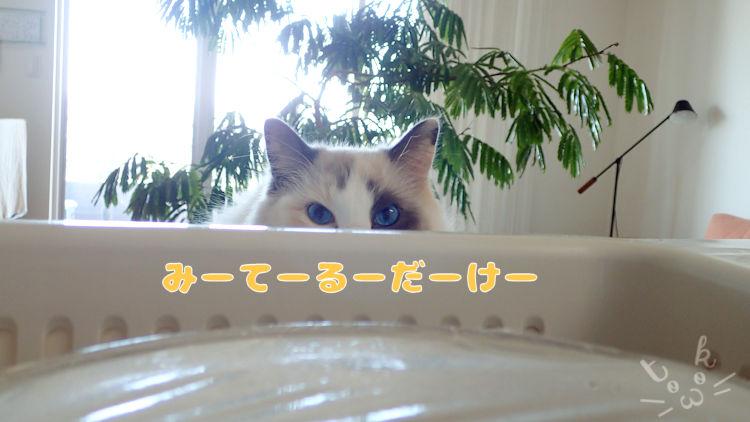 水切りかごの向こう側から猫が目を光らせている