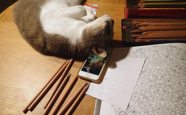 開いた塗り絵本に猫がのっかってきて邪魔をしている