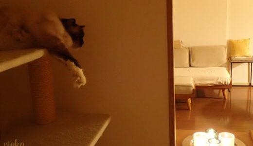 ろうそくの灯りに猫も癒される?!