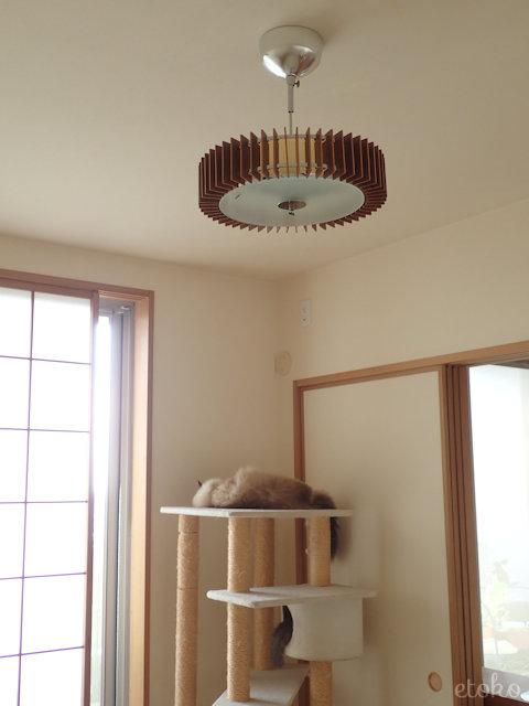 天井照明のしたにあるキャットタワーでラグドールとサバトラソックスの猫が寝ている