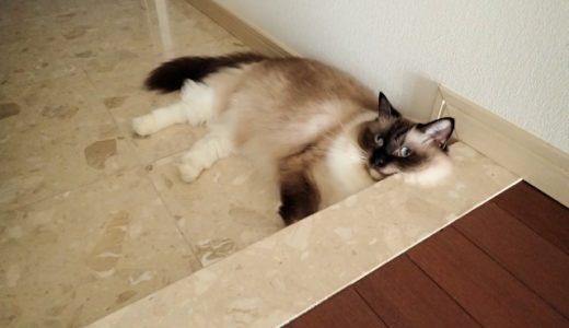 猫涼しい御影石