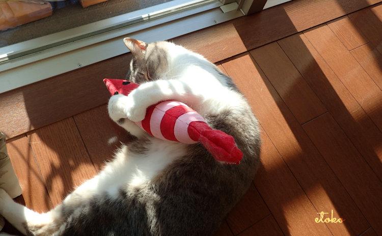 けりぐるみを抱きしめて寝ているサバトラソックスの猫