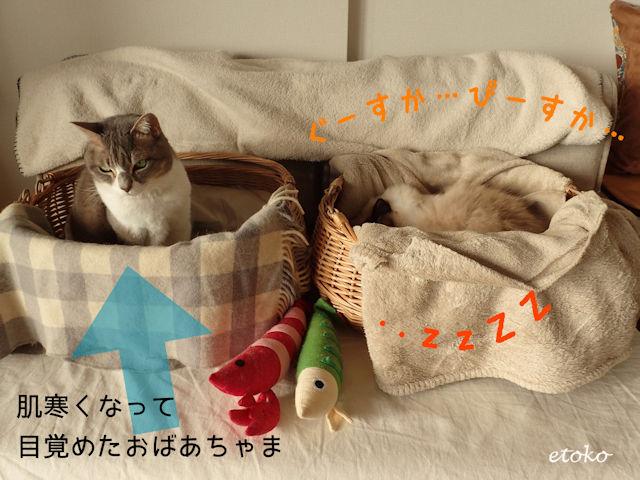 冬の日、エアコンの効かない室内で猫カゴのなかで目が覚めたサバトラソックスの猫
