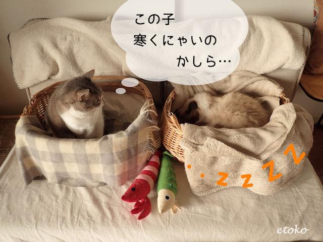 隣の猫カゴの中で眠るラグドールを見るサバトラソックスの猫