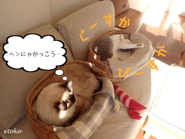 ラグドールがサバトラソックスの猫の寝相を見ている