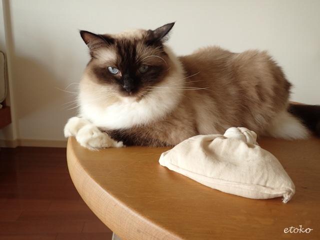 ダイニングテーブルの上に米ぬか袋が置かれ、すぐそばに猫が座っている