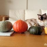 猫にかぼちゃを見せたらどうなる?