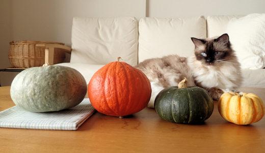 かぼちゃとねこ
