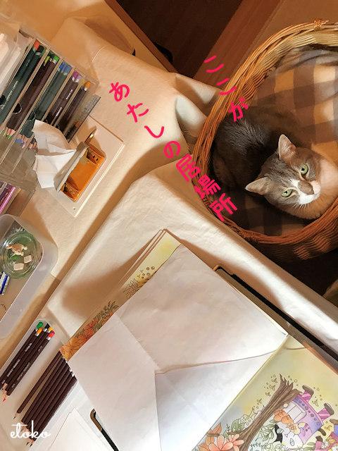 作業机横の猫カゴからこちらを見ているサバトラソックスの猫