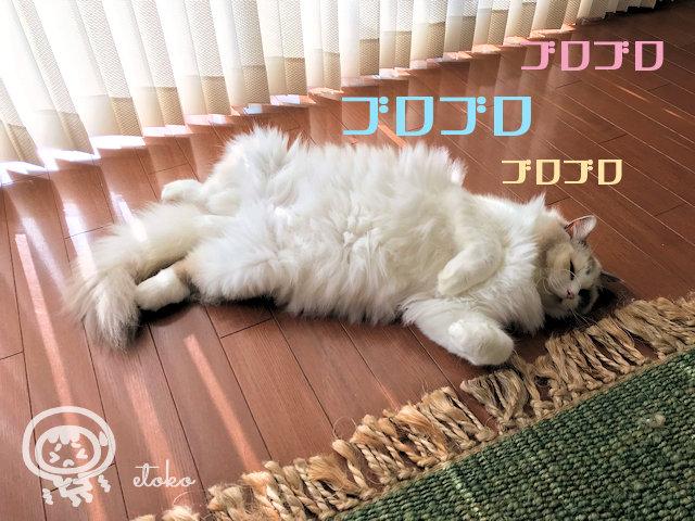 床にあおむけに転がって寝ているラグドール