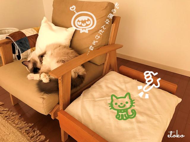 ソファでぐっすり寝入るラグドール