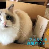 猫の好奇心を満足させる暮らし方