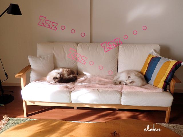白いソファの上でラグドール2匹が寝ている