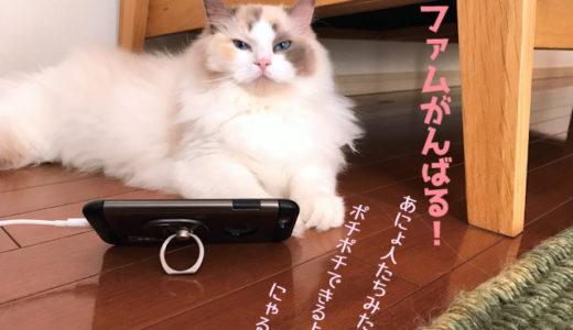 猫にも一台スマホ時代