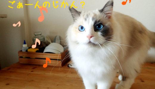 家族でつける猫の健康管理ノート~うちの場合~