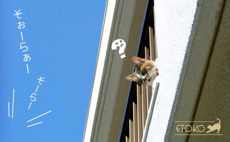 ベランダから顔をのぞかせるキジトラソックスの猫