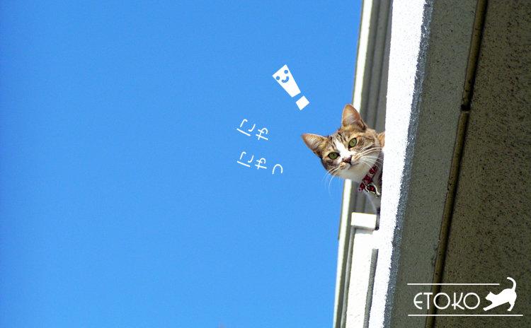 ベランダから頭だけ出してこちらを見ているキジトラソックスの猫
