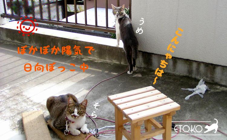 ベランダにて爪とぎの上にのったキジトラ猫とベランダの縁に前足をかけているサバトラ猫がこちらを見ている
