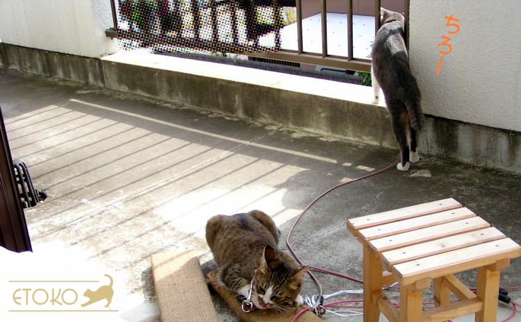 ベランダの縁に前足をかけて、通りのほうを覗き見ているサバトラ猫と爪とぎの上でうつらうつらしているキジトラ猫