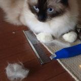 猫の毛のブラッシングは雨の日に|短毛・長毛のお手入れ方法と道具