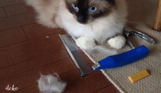 猫の毛のお手入れは雨の日に|短毛・長毛のブラッシング方法と道具