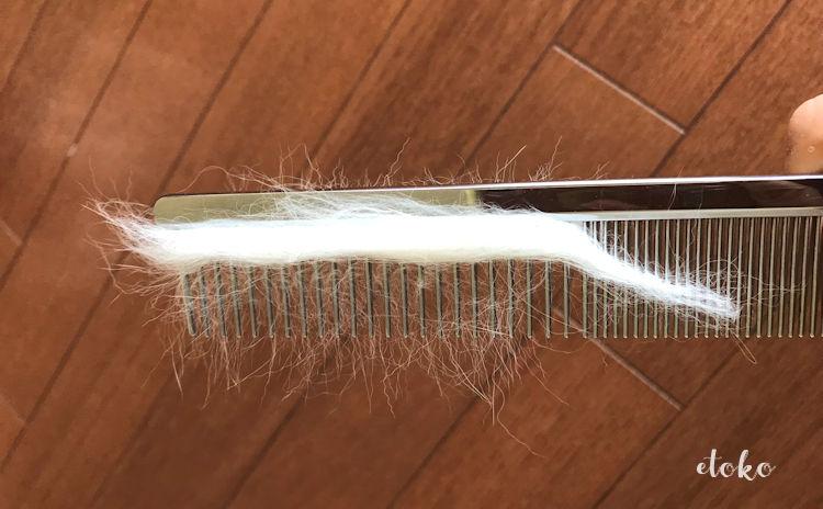 コーム(金櫛)に猫の毛が絡みついている