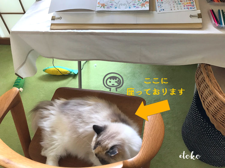 作業机の椅子に寝そべるラグドール