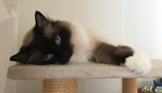 ちょっとひと息、猫画像で間違え探し
