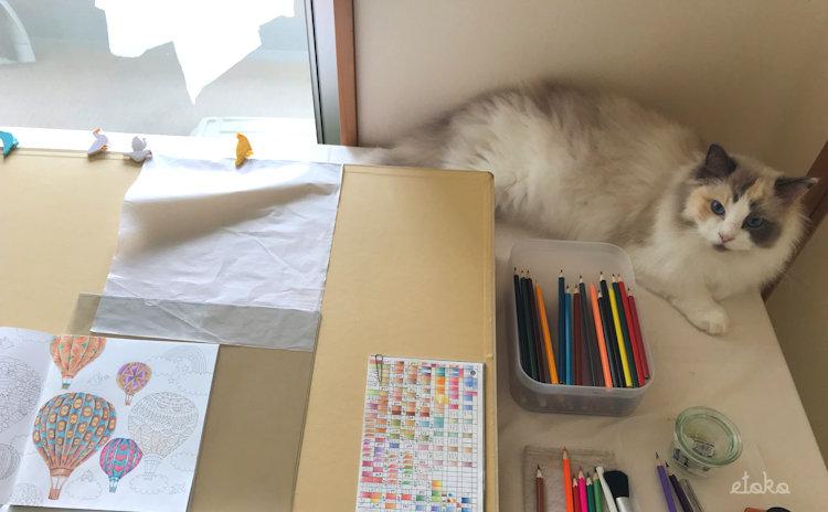 作業テーブルの端を陣取るラグドール