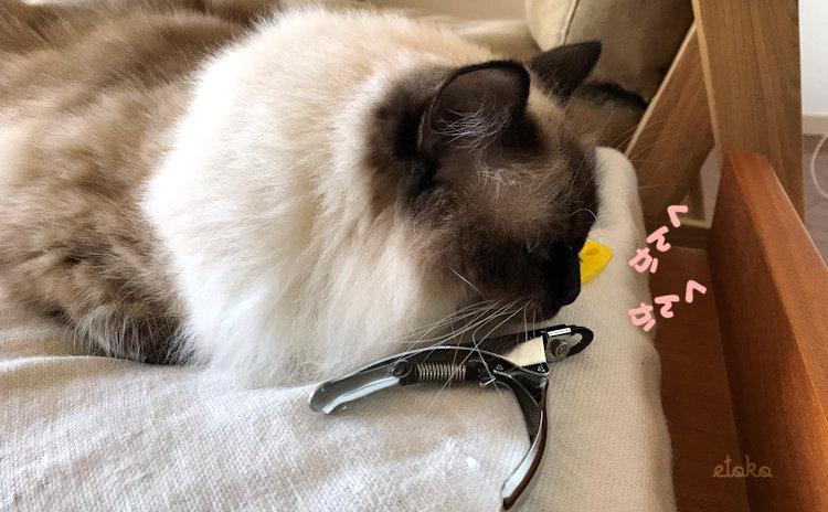 改造して猫のお手入れグッズを置けるにしたオットマンの上にはラグドールと猫用爪切りが置かれている