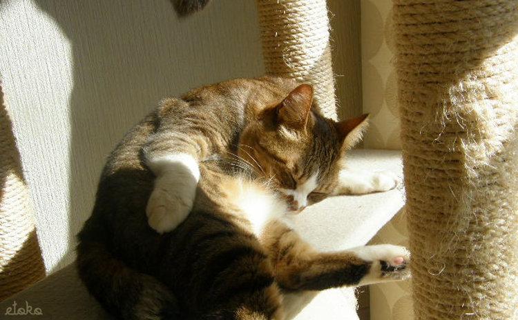 キャットタワーで日向ぼっこをする猫