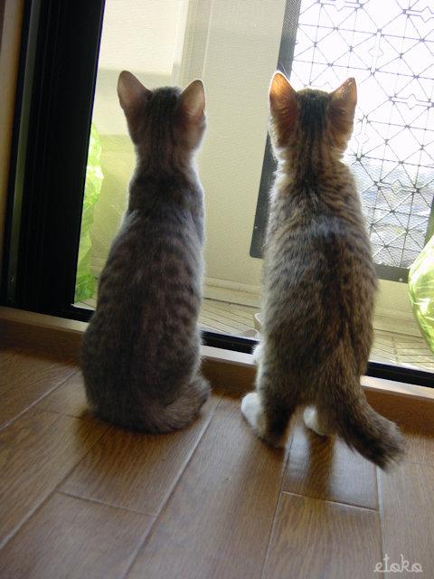 賃貸アパートの窓際に仔猫が2匹座って外を見ている