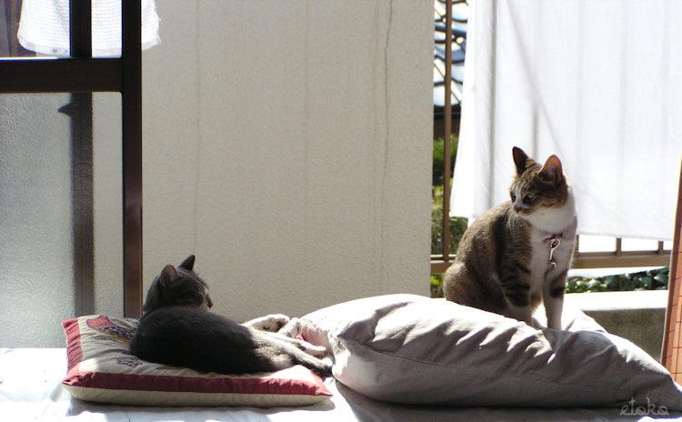 戸建ての2階ベランダ際の窓辺にて2匹の猫がくつろいでいる