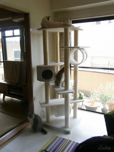 賃貸アパートの窓辺のキャットタワーに3匹の猫がのっている