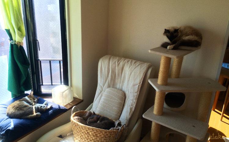 出窓の座布団、マッサージチェアのかごの中、キャットタワーの上でそれぞれ猫が寝ている
