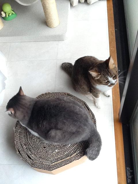 丸い形の猫用爪とぎに猫が乗っている