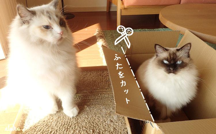 段ボールの箱型猫用爪とぎとラグドールの入った空箱