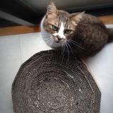 手作りした丸い形の猫の爪とぎとキジトラソックスの猫