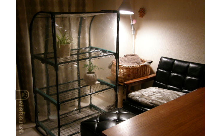 室内に置かれたビニールハウスの中にクッカバラとオリヅルランが入れてある