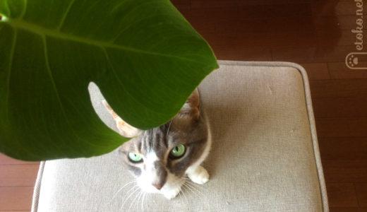 猫も植物が好き?観葉植物をめぐる攻防戦
