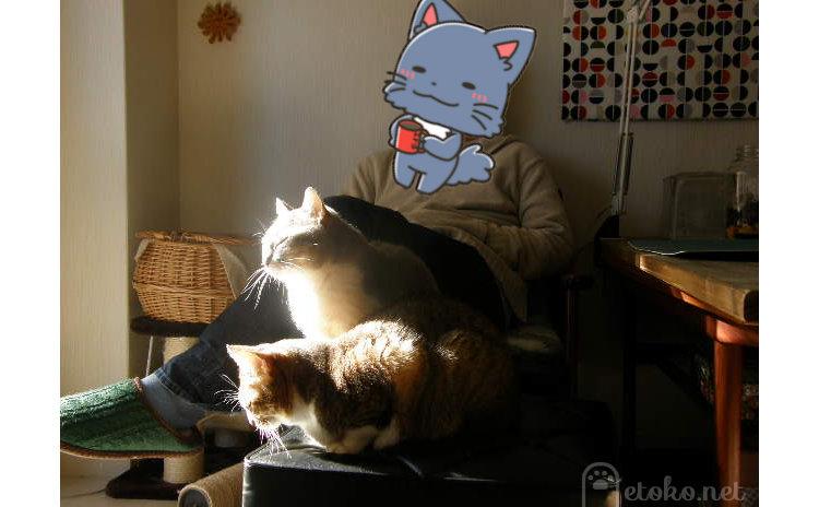 猫2匹とソファに腰かけた人が日向ぼっこをしている