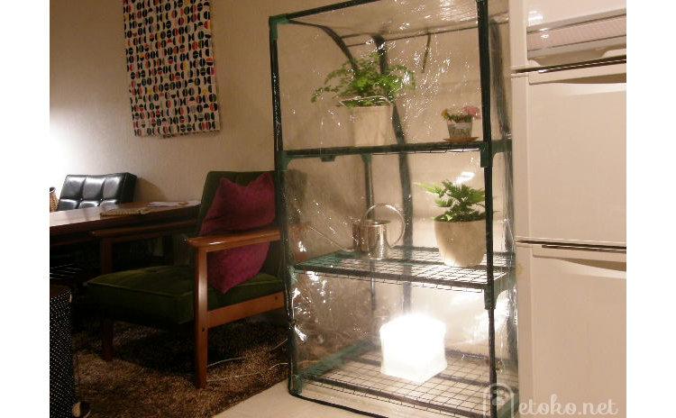 リビングに置いた室内温室の中に観葉植物とフロアライトが入れられている